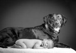 babyfotoshoot met huisdier